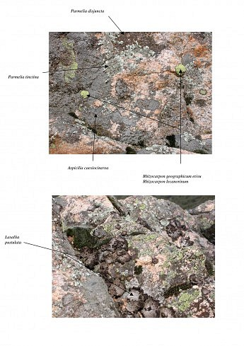 Lichens Belvèdère